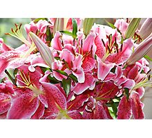 A bunch of Lilies Photographic Print