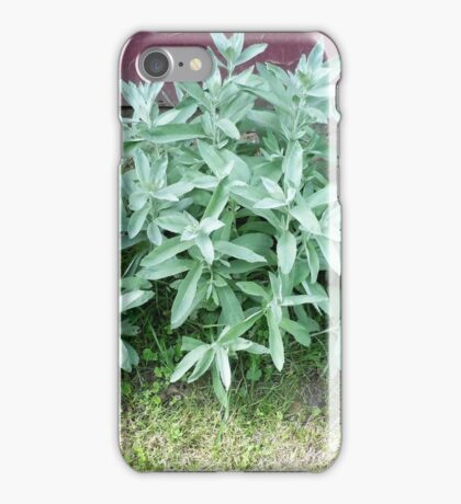 Annual blue spruce & summer plant iPhone Case/Skin