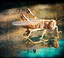 Patience Young Grasshopper by Whitney Mason