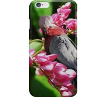 GALAIYA BIRDS >ROSE BREATSTED COCKATOOS>>(FEMALE AND MALE) PICTURE AND OR CARD iPhone Case/Skin