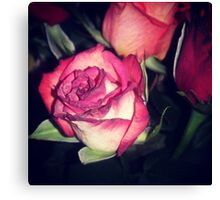 Pretty Pink Rose Canvas Print