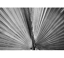 Frond close up Photographic Print