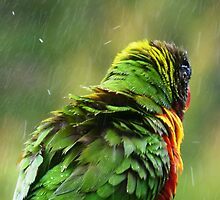 After Bath Shower. by Trish Meyer