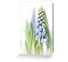 It's so nice to see them grow.... Greeting Card