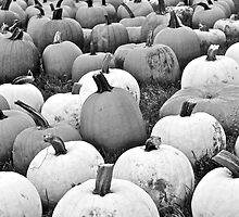 Hundreds of Pumpkins by jjastren