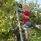 Apple Picking by Sandra Fortier