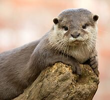 Otter 2 by Ellesscee