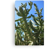 Big Cactus With A Blue Sky Canvas Print