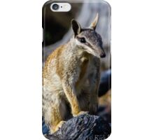Dryandra Numbat iPhone Case/Skin