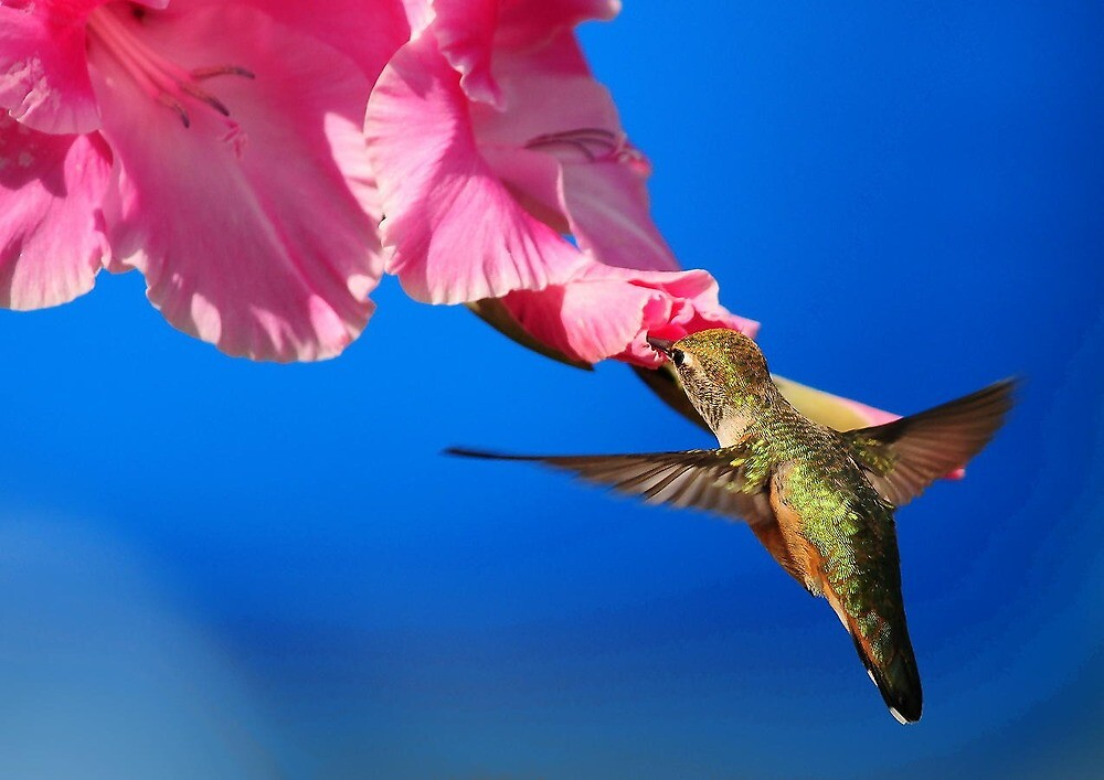 THE FLIGHT OF THE HUMMINGBIRD by RoseMarie747