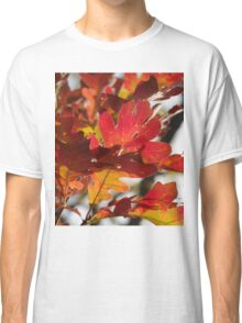 Oak Glow - Autumn Colors Classic T-Shirt