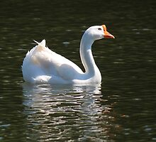 Chinese Goose by Bob Hardy