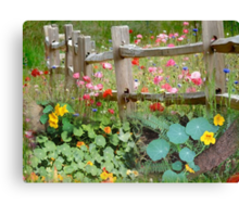 Nasturtium fields Canvas Print
