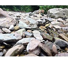 on the rocks Photographic Print