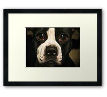 Dog with the Bulging Eyes Framed Print