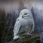 Snowy owl looking for prey by Tarrby