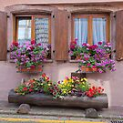 Two Windows and Colorful Flowers by Yair Karelic