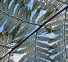 Abstract fern by Casey Argall