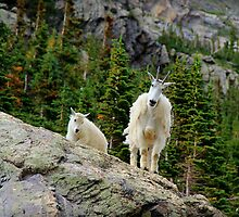 Baby and Mamma Mountain Goat by Danielle Marie Photography
