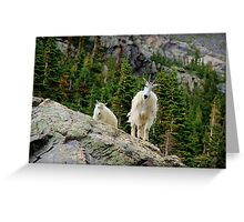 Baby and Mamma Mountain Goat Greeting Card