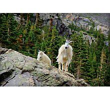 Baby and Mamma Mountain Goat Photographic Print