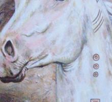 Habib Shael -- Akhal Teke Stallion Sticker