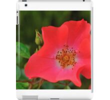Golden Anthers on a Field of Red iPad Case/Skin