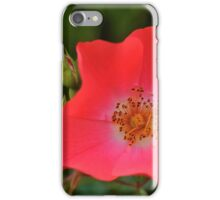 Golden Anthers on a Field of Red iPhone Case/Skin