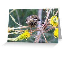 Wattle Bird and Yellow Grevillea Greeting Card