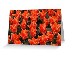 keukenhof gardens, the netherlands Greeting Card
