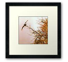 """Taking Flight"" Framed Print"