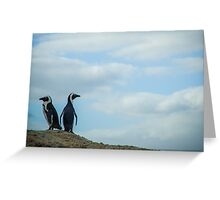 Penguins of Simons Town (2) Greeting Card