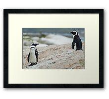 Penguins of Simons Town (4) Framed Print