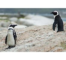 Penguins of Simons Town (4) Photographic Print