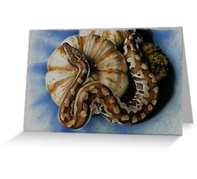 Blood Python Greeting Card
