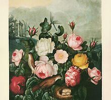 Roses, a plate from The Temple of Flora (1805) by HumanlineImages