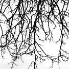 Bird Silhouette by Alberto  DeJesus