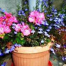 Blue and pink by Ana Belaj