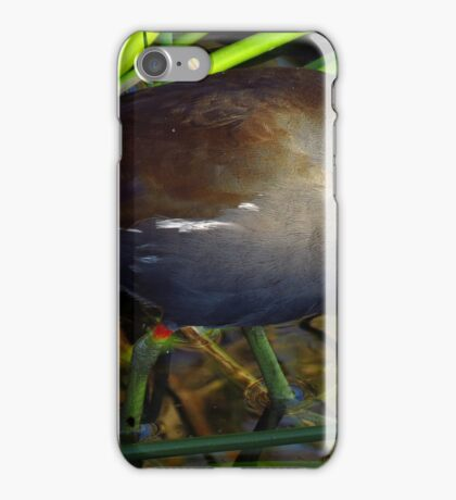 The Beautiful World Of The Flying Wonders ~ Part Ten iPhone Case/Skin