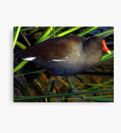 The Beautiful World Of The Flying Wonders ~ Part Ten Canvas Print
