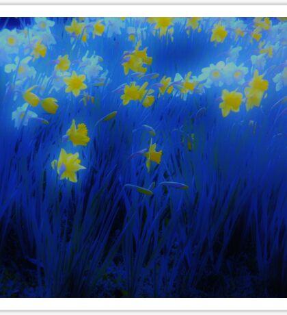 Narcisos (Daffodils) Sticker