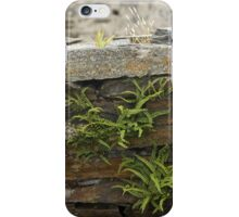 Spleenwort Maidenhair fern on wall at Cashelnagor iPhone Case/Skin