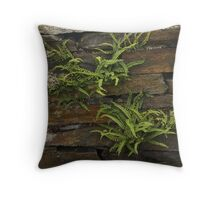 Spleenwort Maidenhair fern on wall at Cashelnagor Throw Pillow