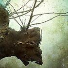 Stag of Sneem by Carol Bleasdale