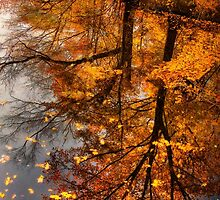 Fall Reflection  by LudaNayvelt