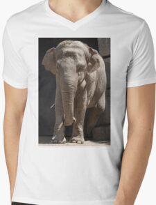 elephant at the zoo Mens V-Neck T-Shirt
