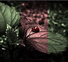 The ladybird by vireshwar