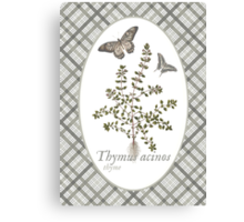 Butterflies and Thyme Canvas Print