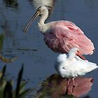 Roseate Spoonbill & White Ibis by Gail Falcon