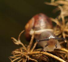 Snail Selfie by stresskiller